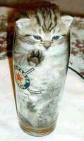 Pint-sized cat?